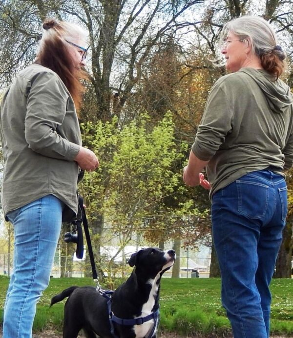 dog owner trainer triangle