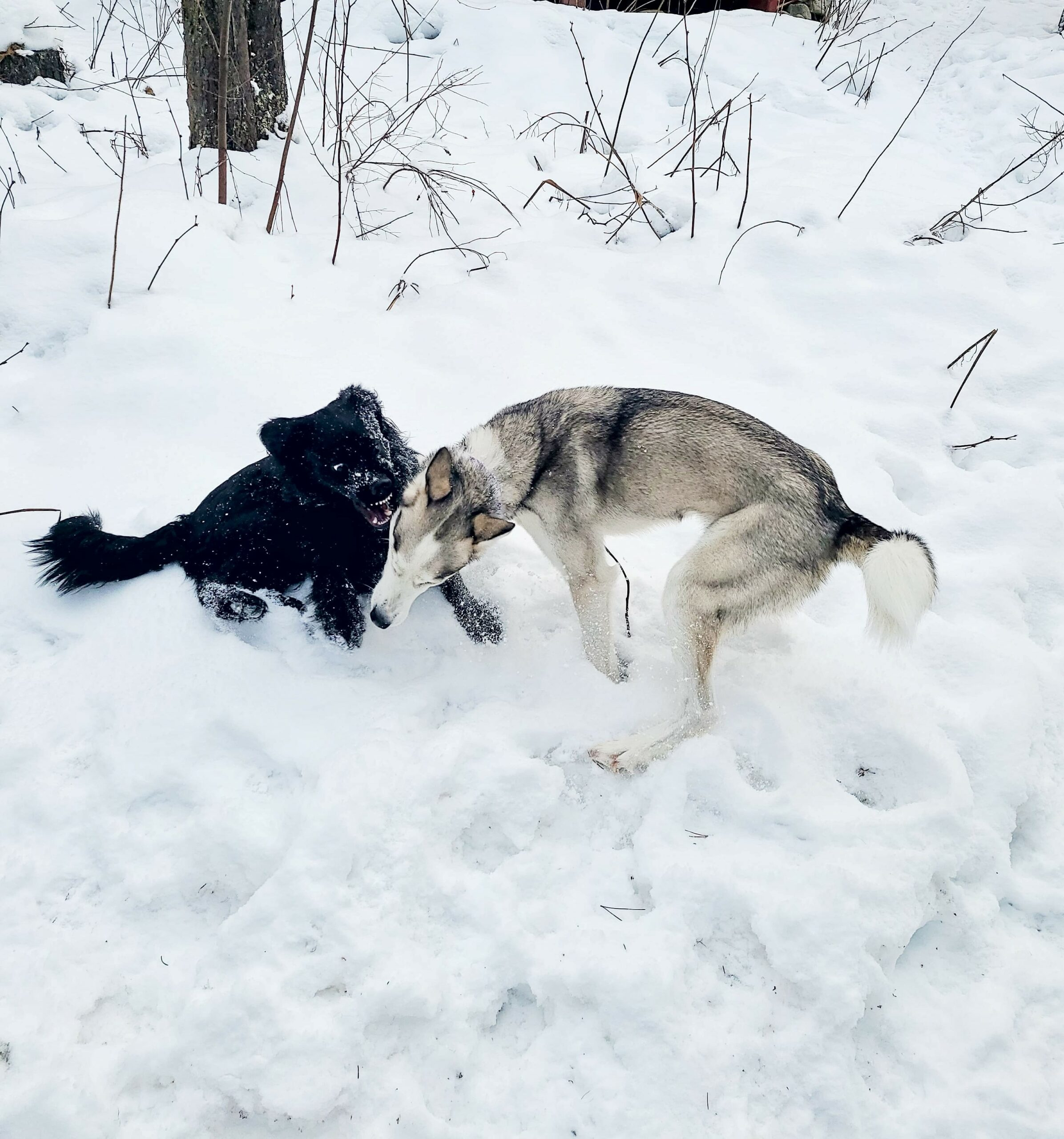 Dog Fights in the Family