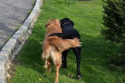 Side-by-Side walking–101 DogSpots way!