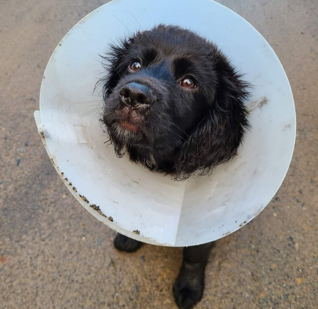 Non-Emergency Veterinary Resources